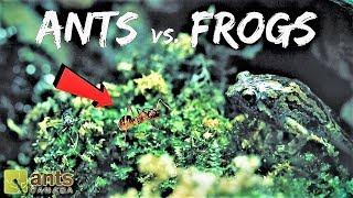 Ants vs. Frogs: Who Eats Who?