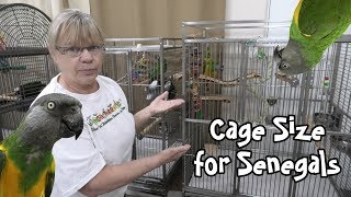 Best Cage Size for Senegal Parrots