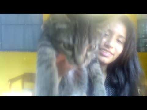 priscila love love cat