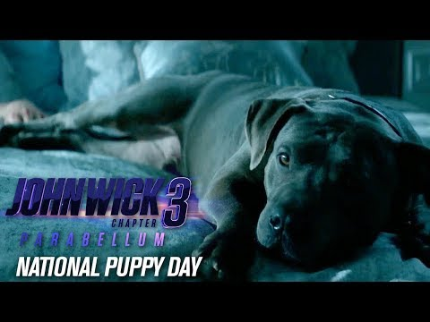 """John Wick: Chapter 3 - Parabellum """"Happy National Puppy Day"""""""