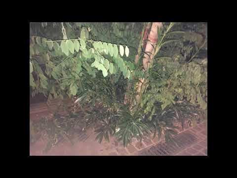 Nalyssa Green - Των πικρών υπνωτικών