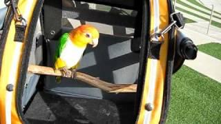 Chewey by the lagoon - PAK-O-BIRD