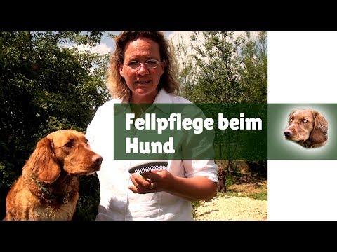 Fellpflege Hund ► Fellpflege für Hunde mit dem Unterwolle Rechen