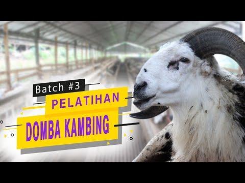 Pelatihan Domba Kambing Perdana dari SapiBagus