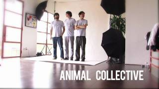 Animal Collective Speak Up for Seals