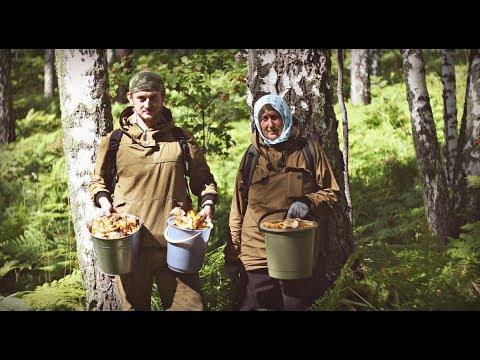 ПОХОД ЗА ЛИСИЧКАМИ / Два ведра в час. Топовые грибники. Лечение в лесу.