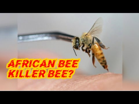 , title : 'AFRICAN BEES..KILLER BEES?