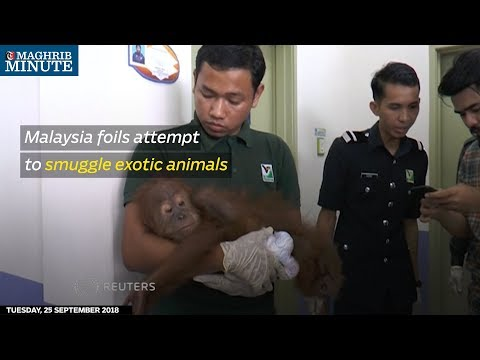 Malaysia foils attempt to smuggle exotic animals