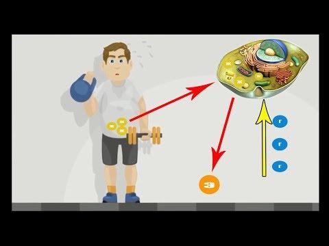 Как убрать жир с живота если есть мышцы