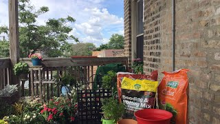 2020 Urban Chicago: Repotting Plants for Beginners!