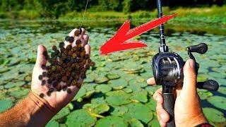 Перец для рыбалки что это такое