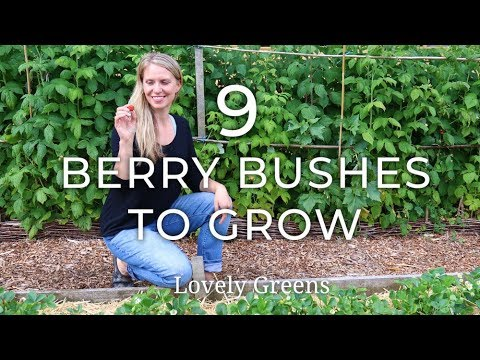 , title : '9 Types of Berry Bushes to grow in your Garden