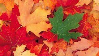 Фото слайд-шоу Природа. Осень.