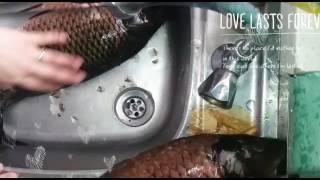 Балықты оңай тазалау əдісі.   Быстрая чистка рыбы