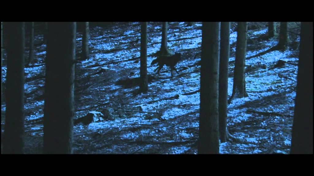 Misha and the Wolves reveals Holocaust survivor hoax
