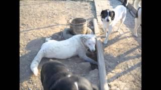 Trikala Shelter Dogs Greece