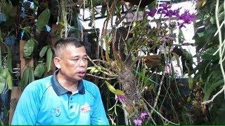 Meraup Untung Dari Hobi Budidaya Anggrek