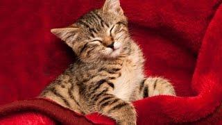 Sleep Music, Calm Music for Sleeping, Delta Waves, Insomnia, Relaxing Music, 8 Hour Sleep, ☯2259