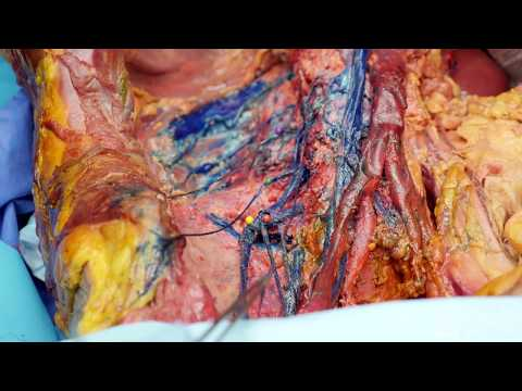 Lumbar Plexus Nerves