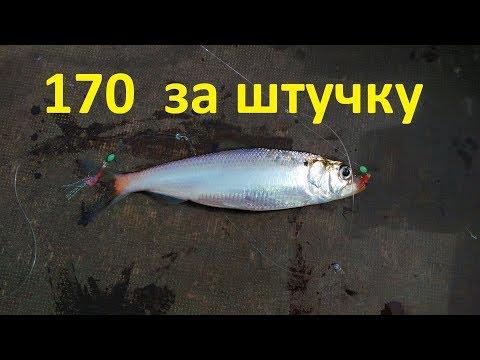 САМАЯ ДОРОГАЯ  и вкусная рыба !!