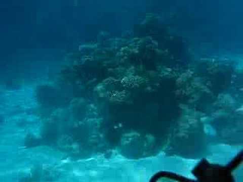 Unterwasserwelt, Ras El Shetan,Nuweiba,Ägypten