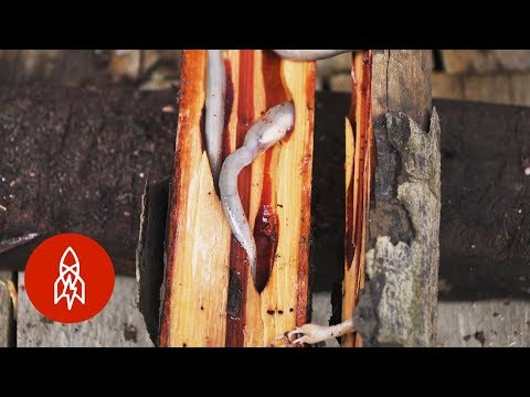 Would You Eat Woodworms in the Philippines?