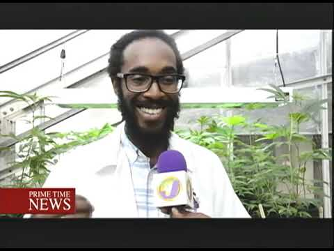 Jamaica Gets Ready For Ganja Industry