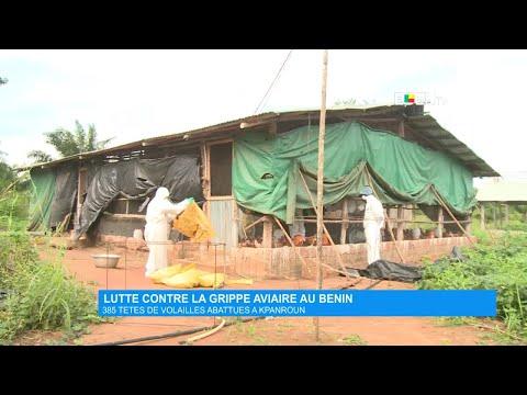 Lutte contre la grippe aviaire au Bénin : 385 têtes de volailles abattues à KPANROUN Lutte contre la grippe aviaire au Bénin : 385 têtes de volailles abattues à KPANROUN