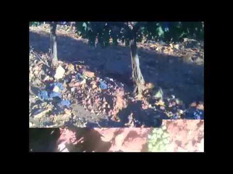 Bodega Vertijana. De los mejores vinos. Polícar. Granada.