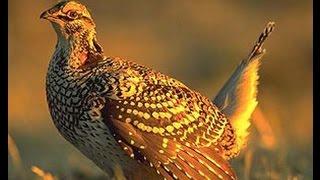 Какие птицы живут в лесу. Учим голоса и названия птиц. Презентация клип птицы леса