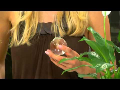 Royal Gardineer Mini-Bewässerungskugeln aus Glas 4er-Set