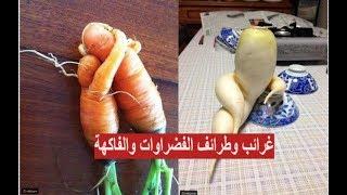 غرائب وعجائب - صور: تتحول إلى بشر.. أشكال غريبة ومضحكة للخضروات والفاكهة