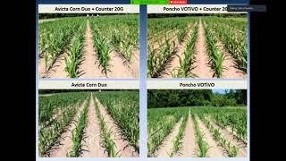 Agronomic Crops Corn Nematodes Austin Hagan February 2017 default