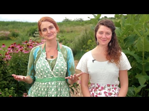 Online Herbal Medicine Making Course - YouTube