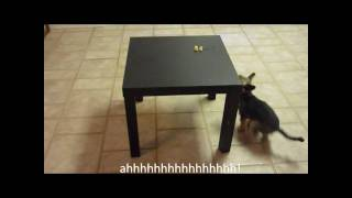 Super Funny Dog Videos (Extended version)