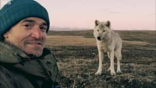 NATURE (vidéo) - Rencontre avec une meute de loups