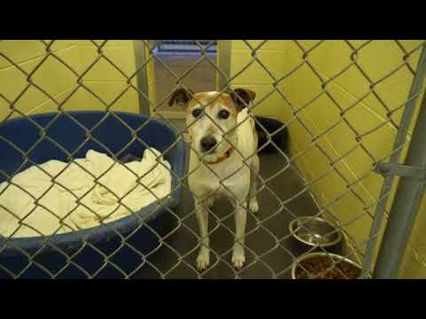 Video: Carter County Animal Shelter, April 20