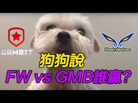 我問我家狗狗 GMB vs FW 誰會贏 ?