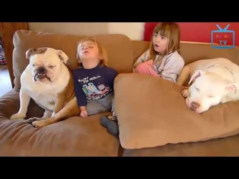 Funny Animal Mating - Funny Sleepy Animals Compilation