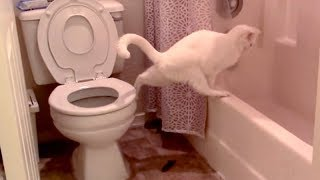 LAUGH HARDER than EVER BEFORE! - Super FUNNY & WEIRD ANIMALS