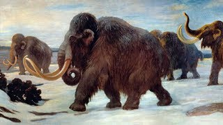 Was There a New Species of Mammoth Found in Siberia?