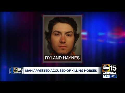 Man arrested, accused of fatally shooting 2 horses in eastern Arizona