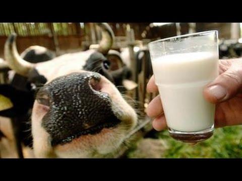 Der Irrsinn mit der Milch ZDF ZDFzoom