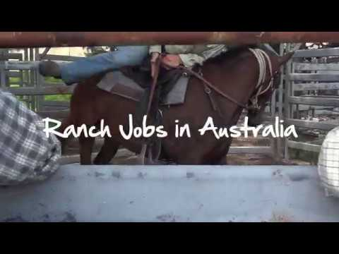 Ranch Jobs in Australia Video