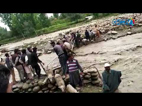 Two shepherds, 550 sheep rescued from flooded stream in Budgam