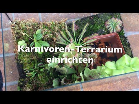 Mein Karnivoren-Terrarium | Einrichtung meines Terrariums | Karnico