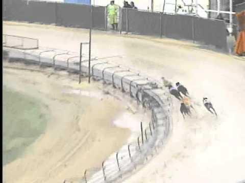 Race 29 Symbioun Stake Flite I