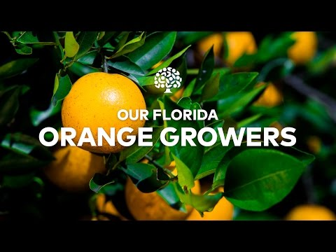 Florida Orange Grower Anthem