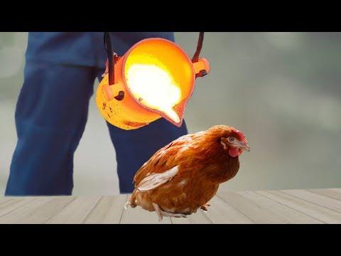 EXPERIMENT: LAVA vs CHICKEN
