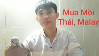 Nên Hay Không Nên Mua Mồi Thái , Malay / Góc Chia Sẽ Của Luân
